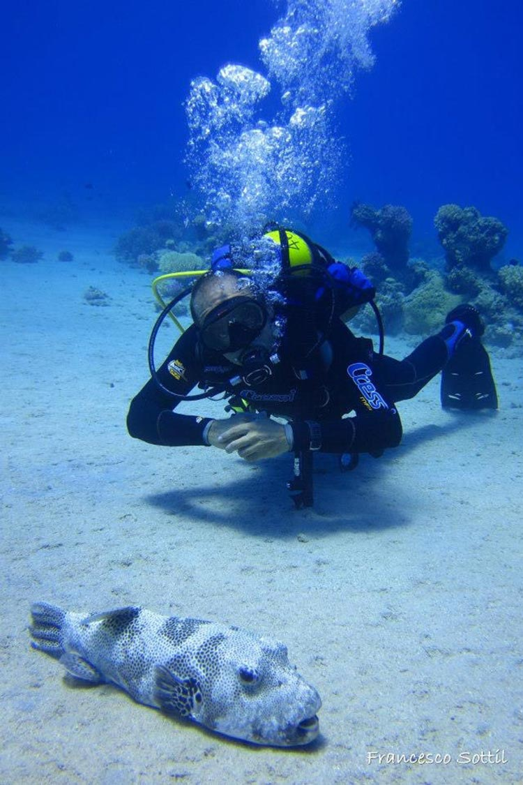Dive holidays in egypt