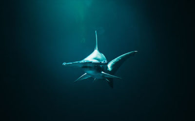 Diving with sharks – would you?
