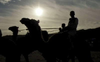 Got to love Dahab! It's not just fantastic diving – It's Camel Races!